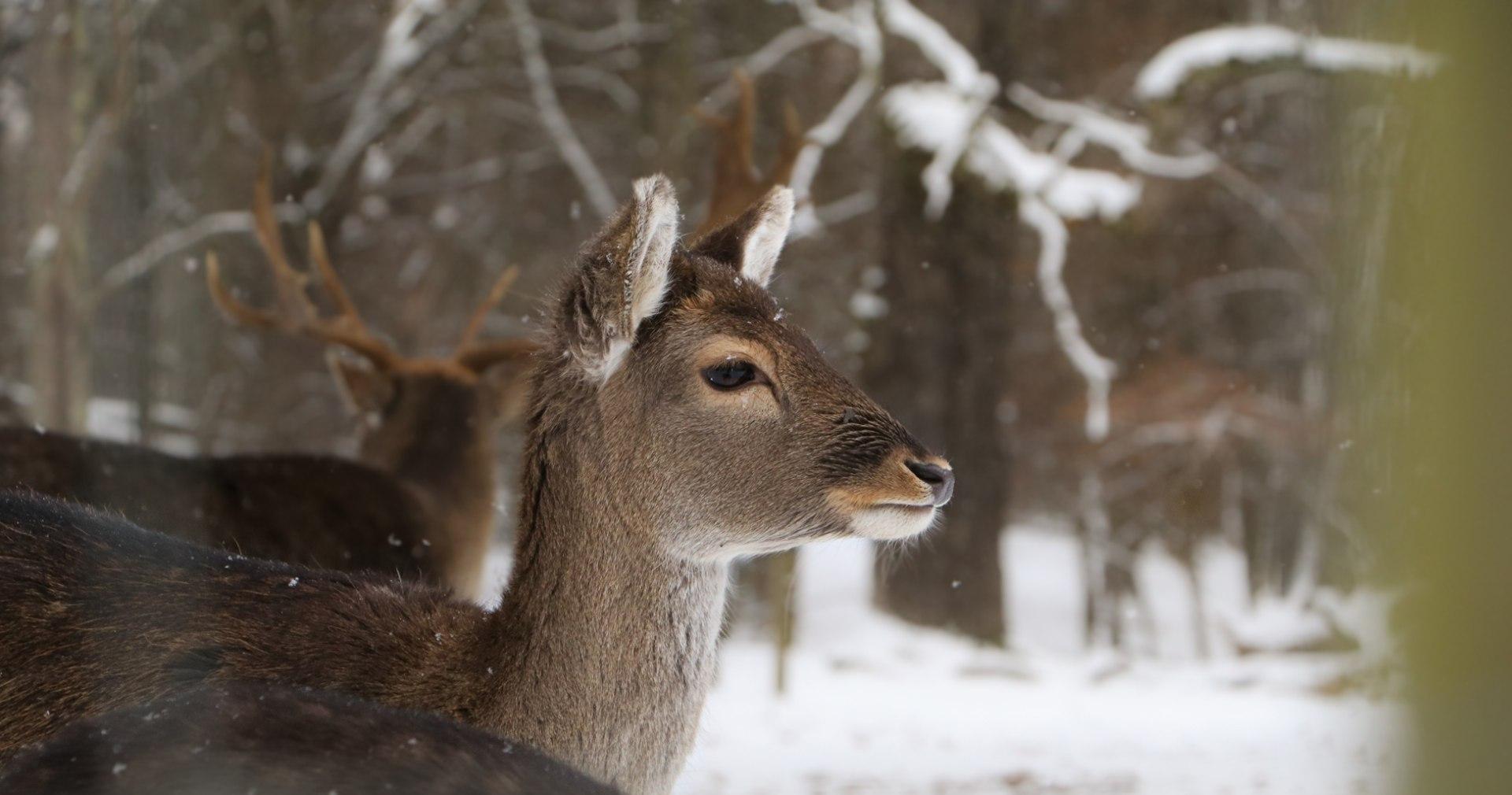 Deer feeding, © Unsplash - Foto S. Moog