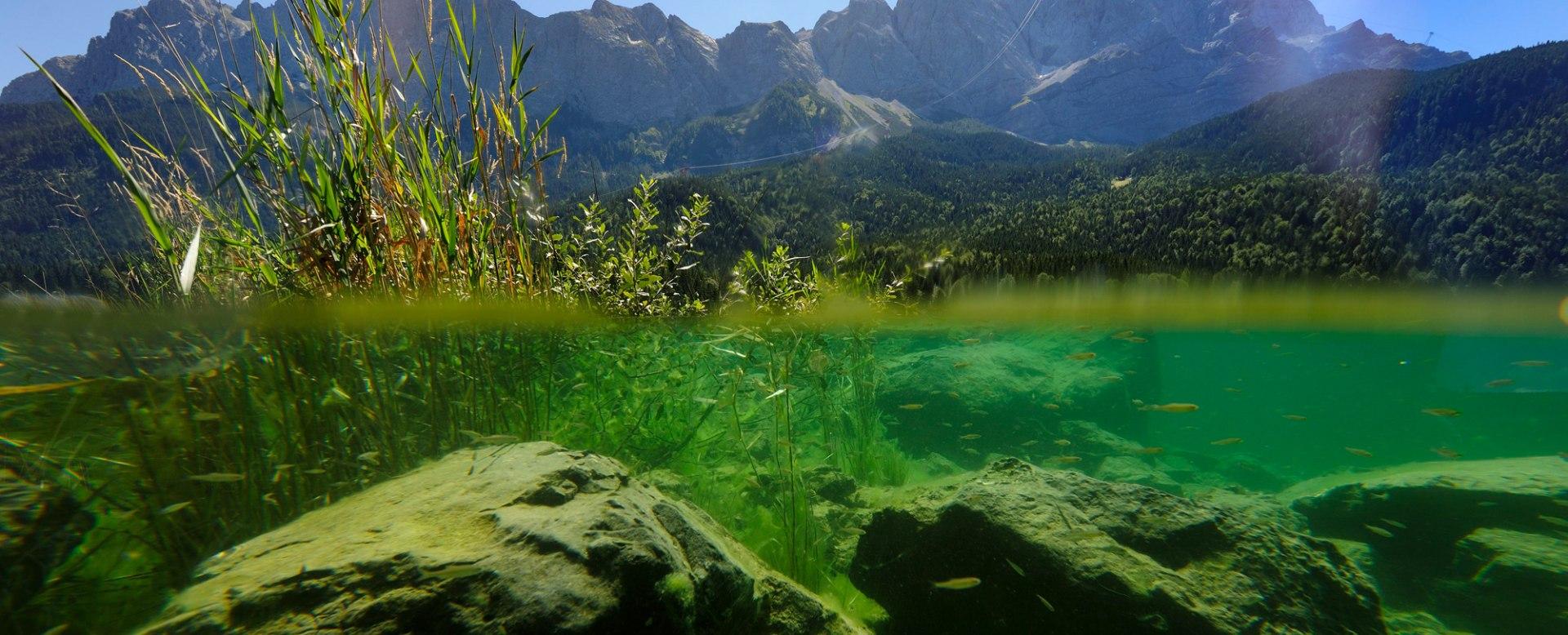 grüner Eibsee, mit Fischen unter Wasser, © Touristinformation Grainau - Foto Ehn