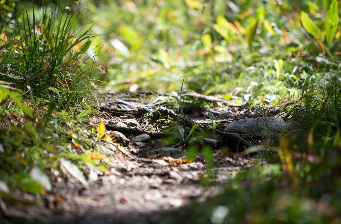 Forest path Huberpark, © Touristinformation Grainau - Foto Mönch